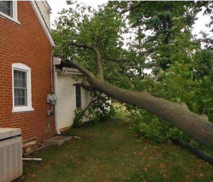 large tree trunk leaning on roof of first story section of house